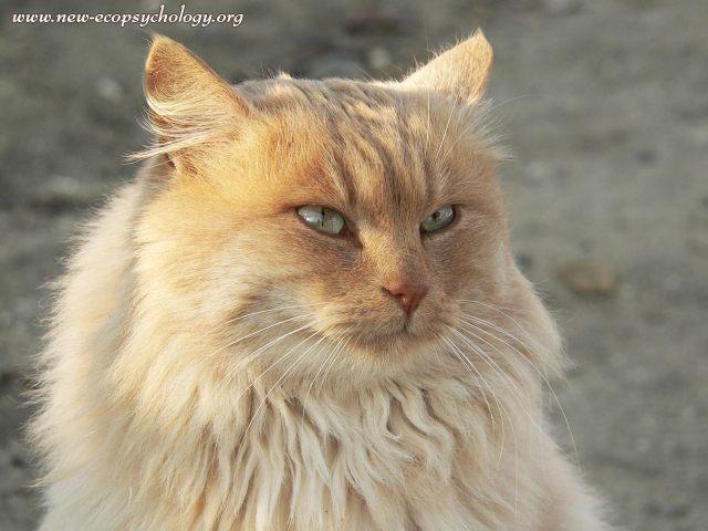 Cat Felis Silvestris Catus