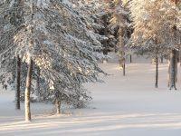 Encantamiento del invierno